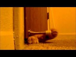 Kot w wersji budzik