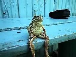 Żaba na ławce