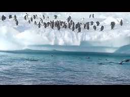 Pingwiny kontra stroma góra lodowa
