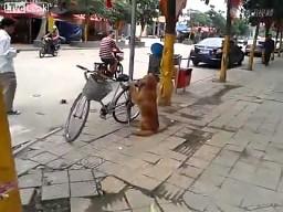 Chiński strażnik rowerów