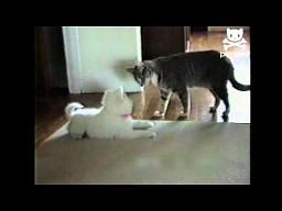 Kot uczy psa