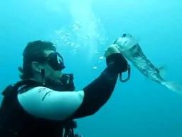 Nurek pomaga rybce