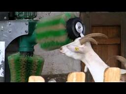Automatyczna myjnia dla kozy