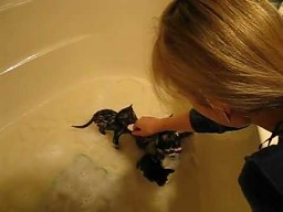 Kotki w kąpieli
