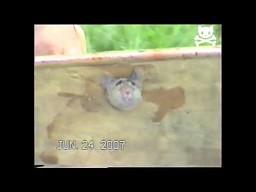 Z pomocą przytkanej myszy