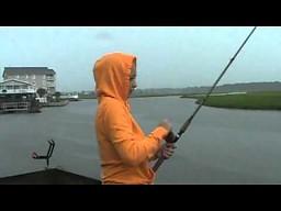 Atak głodnego rekina podczas wędkowania