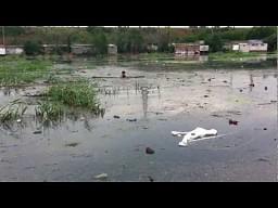 Uratowany szczeniak 11.07.2012
