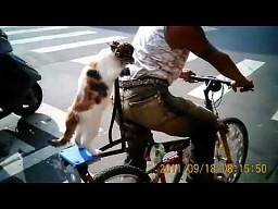 Kot jeżdżący na rowerze ze swoim panem
