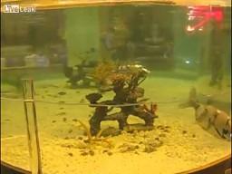 Mechaniczne ryby