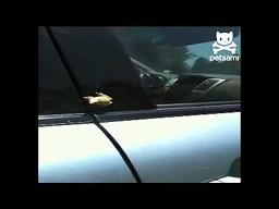 Atak wściekłej żaby