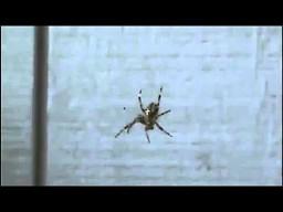 Zabawa z pająkiem
