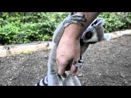 Zwierzak - fetyszak