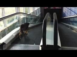 Skonfundowany pies