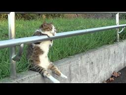 Kot na chilloucie!