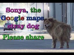 Sonya, pies z Google Maps