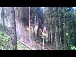 Leśne domino