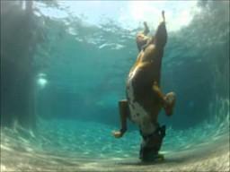 Podwodny pies