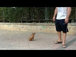 Oto jeden z najmądrzejszych psów świata!