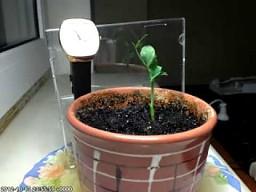3 dni z życia rośliny w 54 sekundy