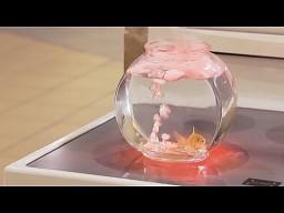 Ukryta kamera: złota rybka na kuchence