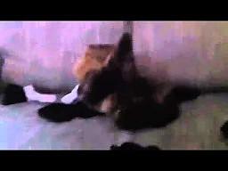 Kotek z ciekawą umiejętnością
