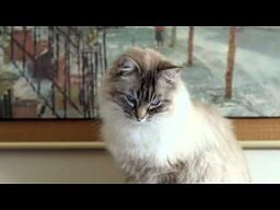 Klawe jest życie kota