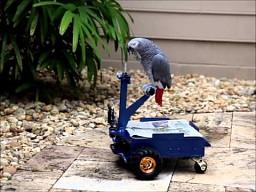 """Samochód"" dla papugi"