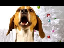 Psie kolędy