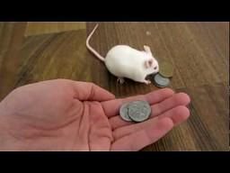 Mysz na zakupach