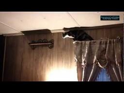 Koci skok na półkę