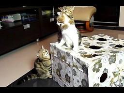 Koty lvl pierdoła