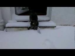 Pierwsze spotkanie ze śniegiem