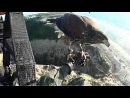 Parahawking - lataj z jastrzębiami