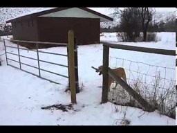Pies z kijkiem w poprzek