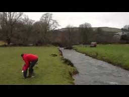 Pies skacze nad rzeką