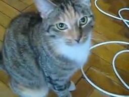 Kot bawi się z DVD