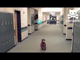 Balonowy bulldog