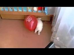 Przestraszony królik