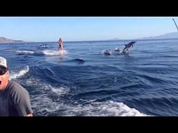 Jazda na nartach wodnych z niespodzianką