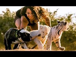 Niezwykła przyjaźń: brunetka, lew, tygrys i buldog