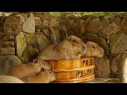 Wspólna gorąca kąpiel