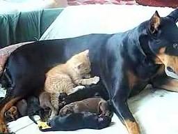 Rodzinna drzemka