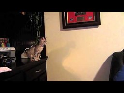 Małe koty nie potrafią skakać