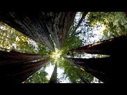 Jak drzewa transportują wodę?