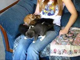 Duże ilości naraz kotów