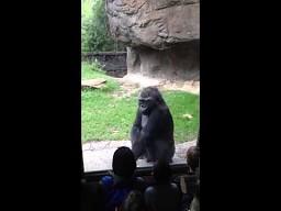 Przestraszył małpy