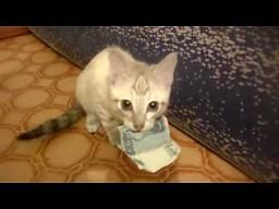 Giną ci pieniądze z portfela?