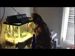 Czelebańska rybka