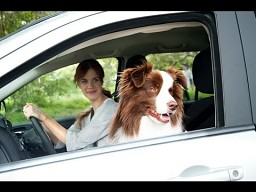Pies z Jeepa