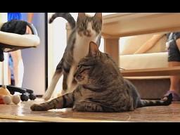 Zwariowana kotka w akcji